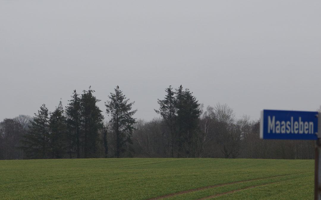 Heute 19 Seeadler auf Schwansen gesichtet: Alleine 17 in Maasleben