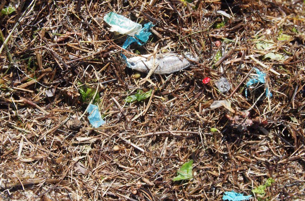 Plastikteilchen nach wie vor in der Schlei