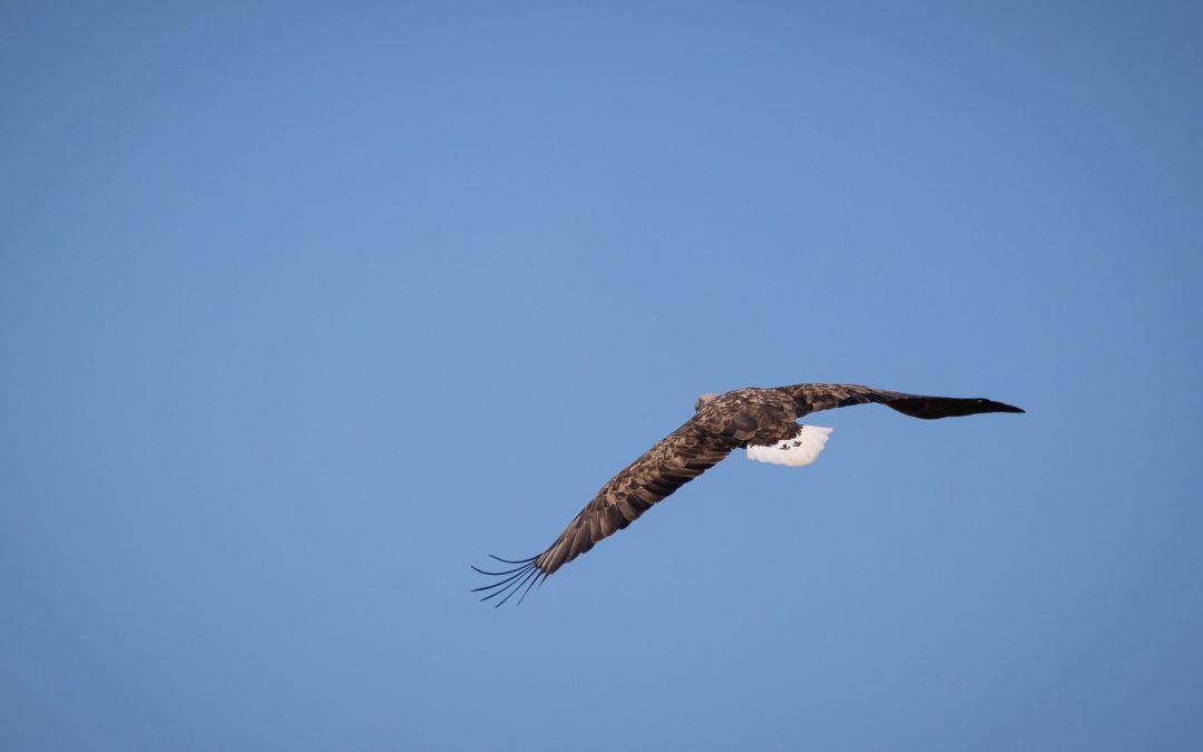 Bodo Puttins gelangen wieder faszinierende Aufnahmen am Burgsee und über Reesholm
