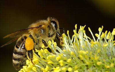 Seeadlerjugend erfährt alles über Bienen: Samstag, 25. Mai ab 10 Uhr