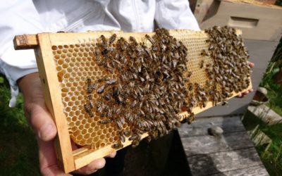 Seeadlerjugend erlebt Bienen mit Imkerin Tine Janssen