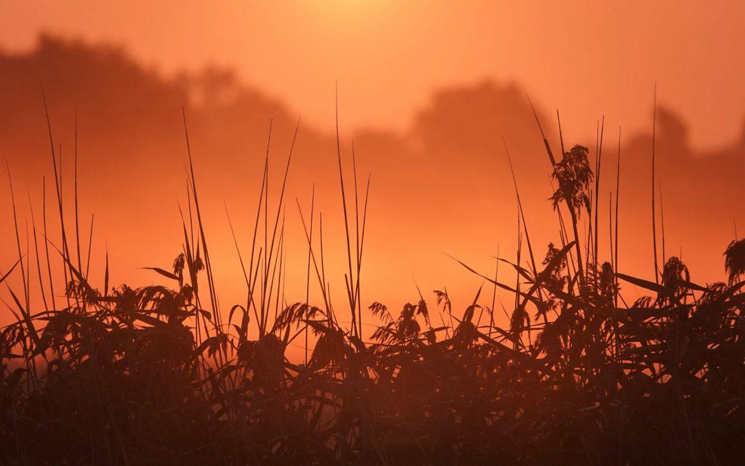 Am frühen Morgen im Naturschutzgebiet Reesholm vor Schleswig