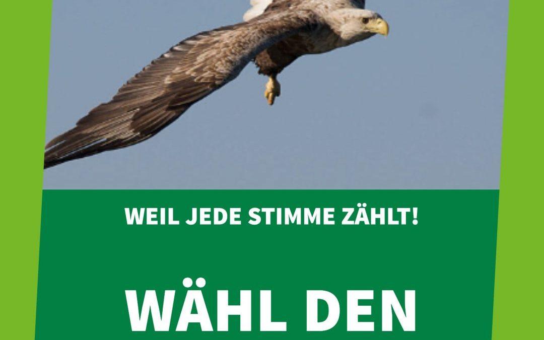 Wahlkampf für den Seeadler: Bitte jetzt mit abstimmen!
