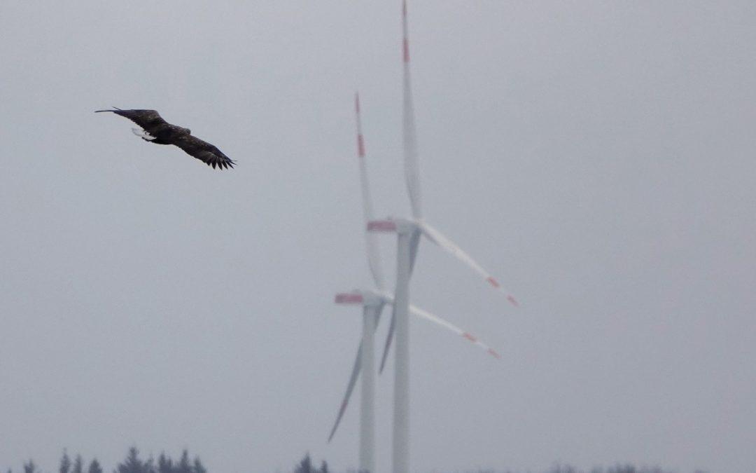 Artenschutzgutachten: Kein Windpark nach Saxtorf!
