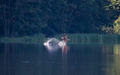 Schnappschuss am Langsee